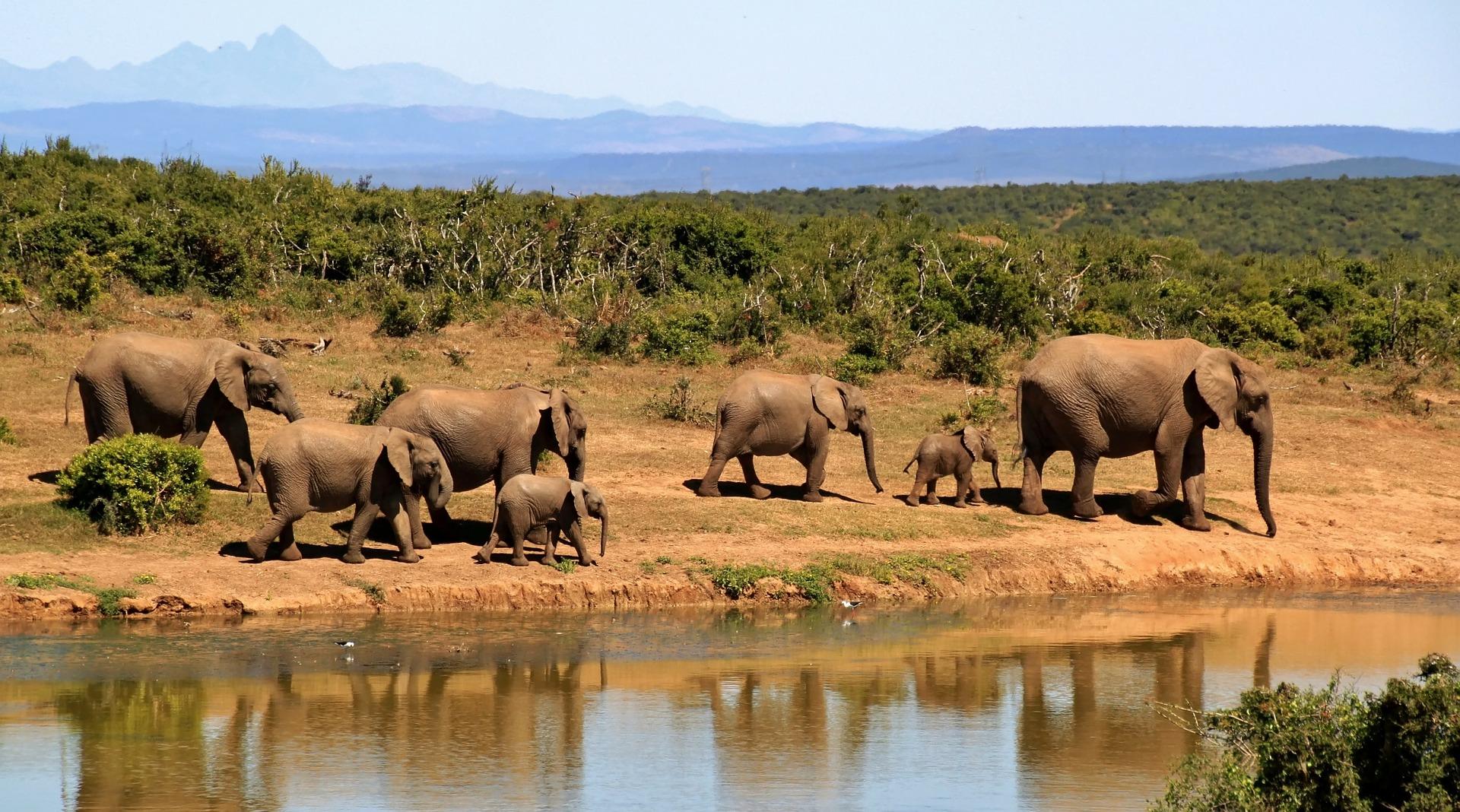 Rentrée des éléphants 2017